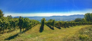 14Vineyards (7)